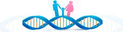 Seleção Genética Embrionária