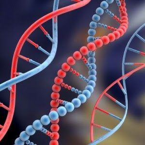 Clones, uma realidade futura para reprodução assistida?