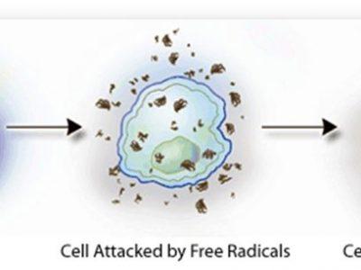 Poluentes Ambientais e Estilos de Vida induzem ao Estresse Oxidativo e pioram a Fertilidade
